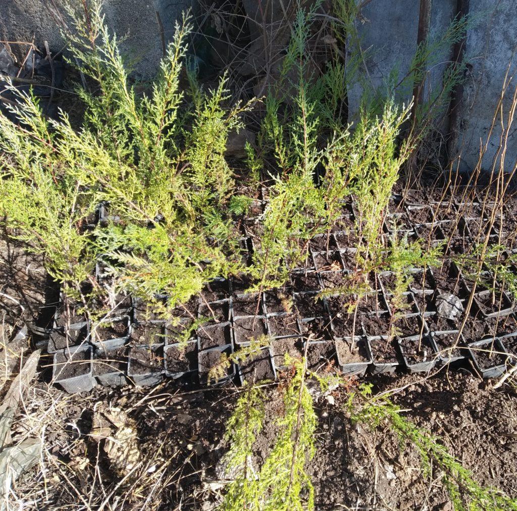 Various tree seedlings