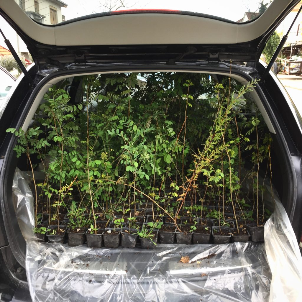 Trunk full of tree seedlings