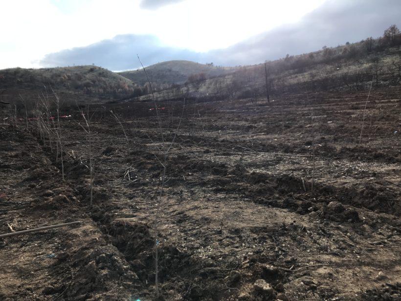 1020 trees planted at Lake Mladost, Veles